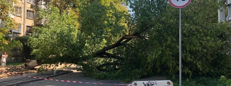 У столиці на Печерську дерево впало на жінку (відео) -  - derevo