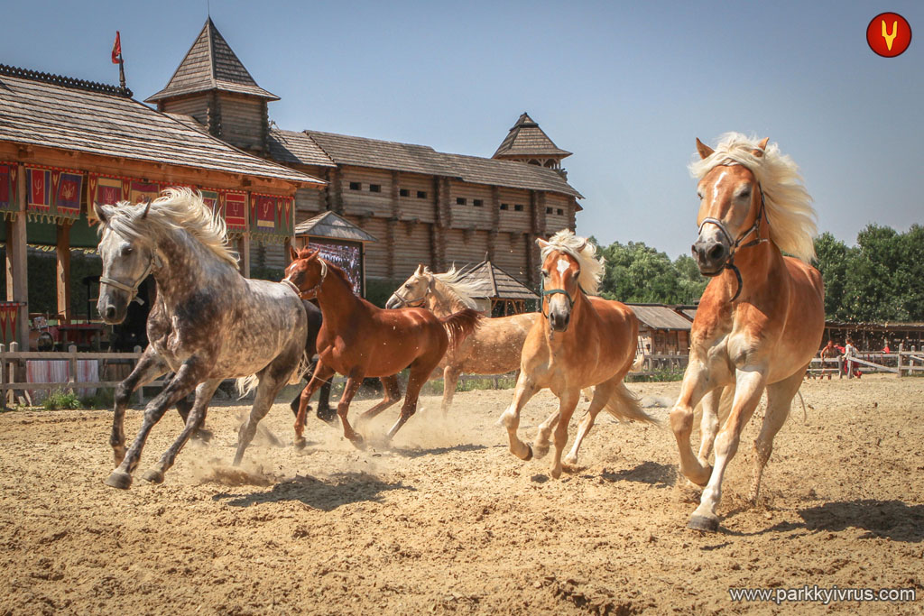 free_horse На День Незалежності у «Парку Київська Русь» обіцяють насичену програму