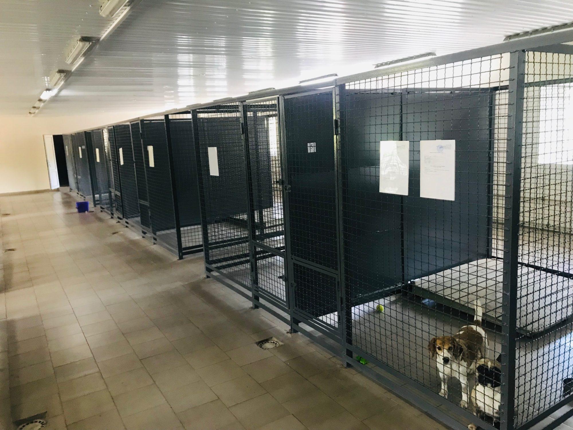img1560497852_3-2000x1500 У Києві планують будівництво Центру захисту тварин