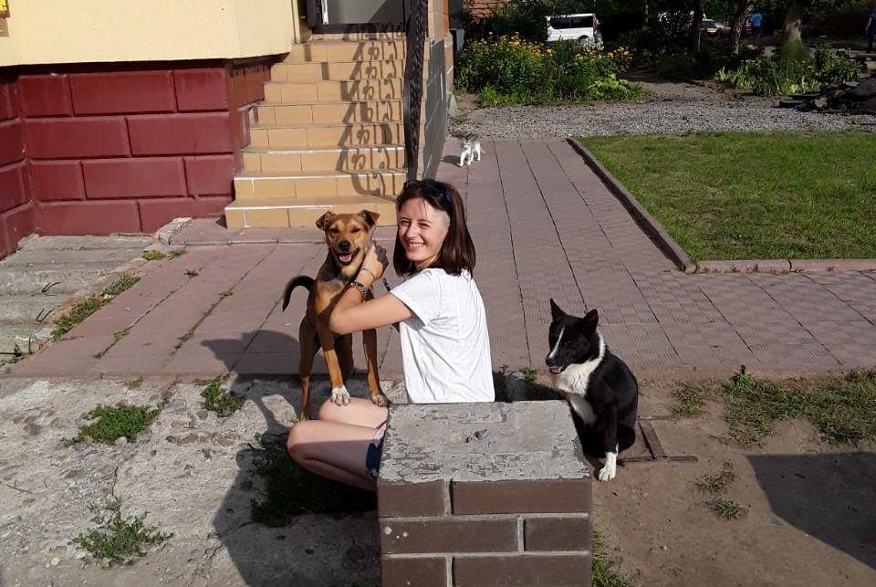 У Білій Церкві оновили статистику по безпритульним собакам - Біла Церква, безпритульні собаки - imgbig 1
