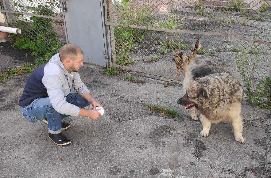 У Білій Церкві оновили статистику по безпритульним собакам - Біла Церква, безпритульні собаки - imgbig 3 1