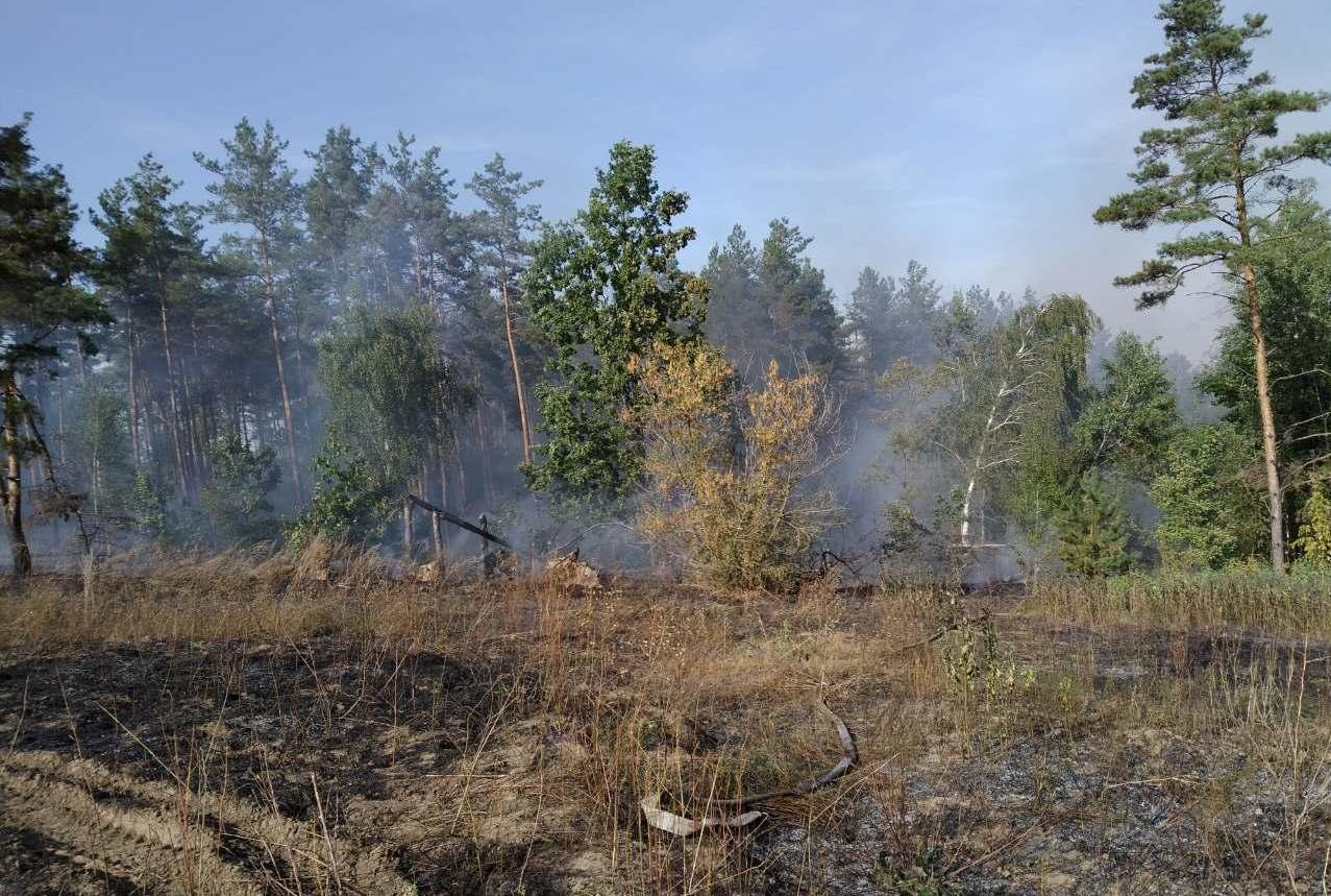 На Васильківщині горіли 3 га лісу