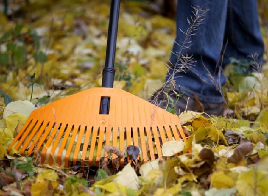 020d043cbfe8f419c5335cab6f6cf6a7_XL Щоб не палили: у Боярці безкоштовно вивозитимуть листя
