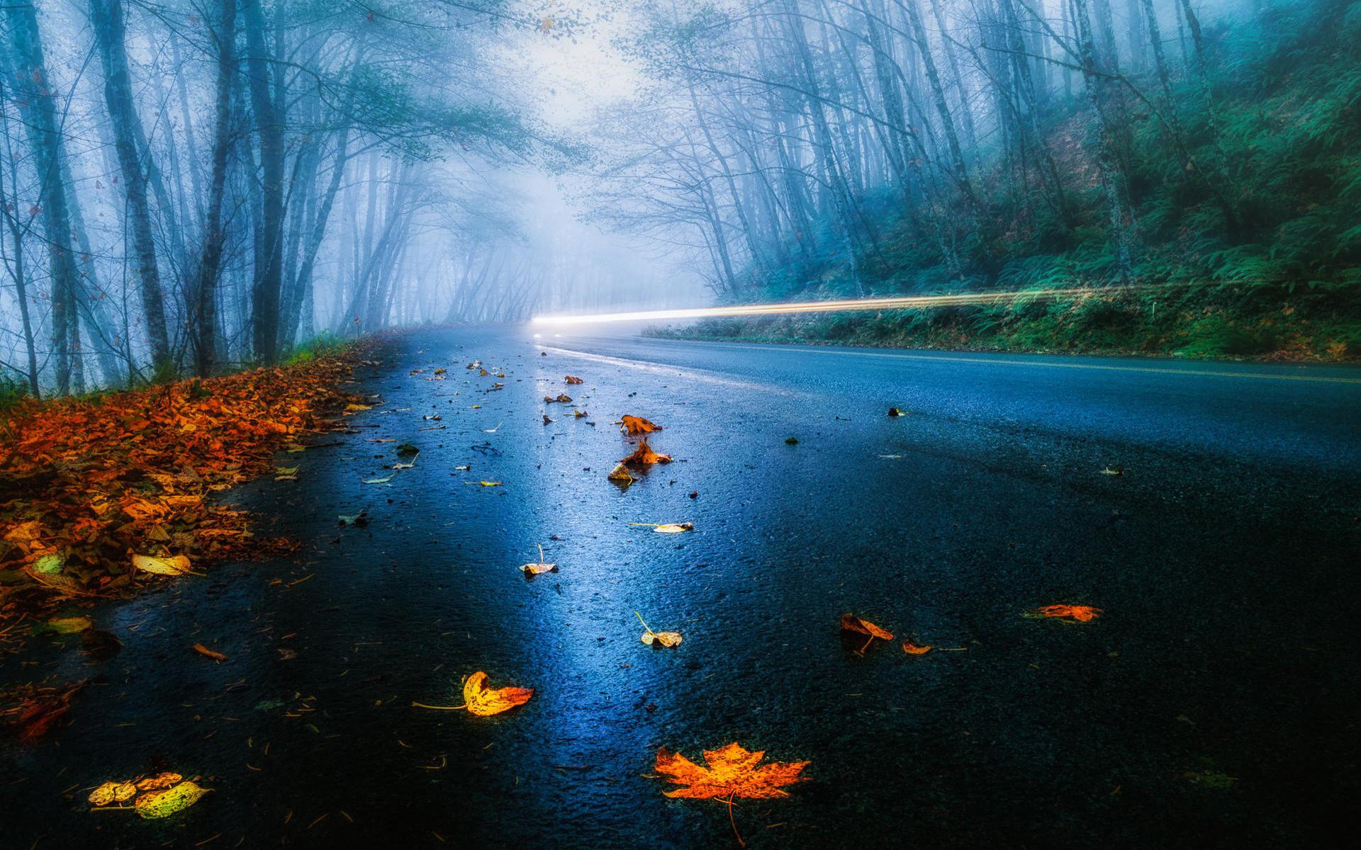 Неділя – 29 вересня – буде вологою, туманною, але теплою