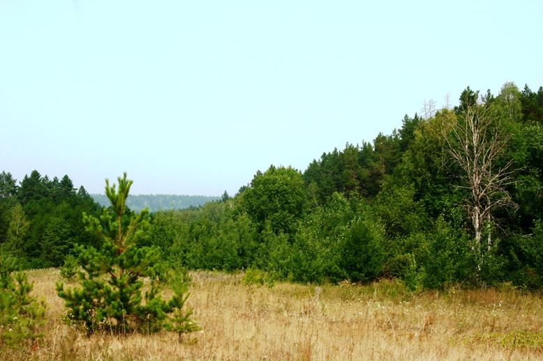 Незаконно роздані землі  Обухівщини прокуратура області прагне через суд повернути державі -  - 1381437972