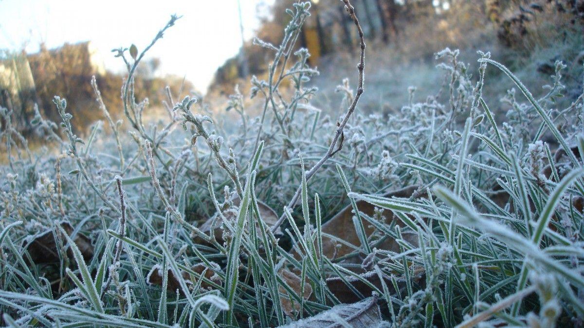 18_zamorozky 20-22 вересня в Україні можливі перші заморозки