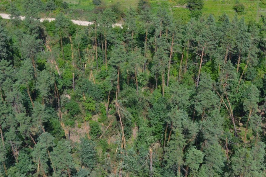 412 Києво-Святошинська РДА передала лісогосподарські землі громадянам незаконно: прокуратура