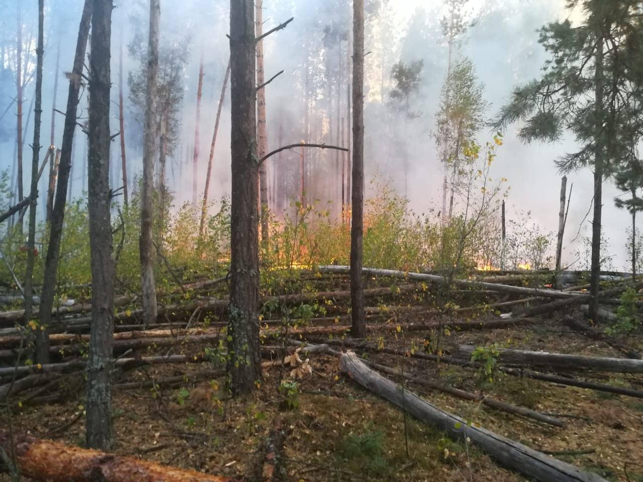 У гасінні лісу в Чорнобильській зоні задіяна авіація -  - 70159000 2461686587395943 6184443080184168448 n