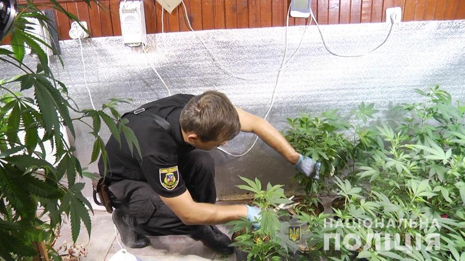 70510535_2469188096469681_8354175294432608256_n Повний цикл марихуани: на Обухівщині «нарко-аграрії» в сучасній лабораторії виробляли наркотики