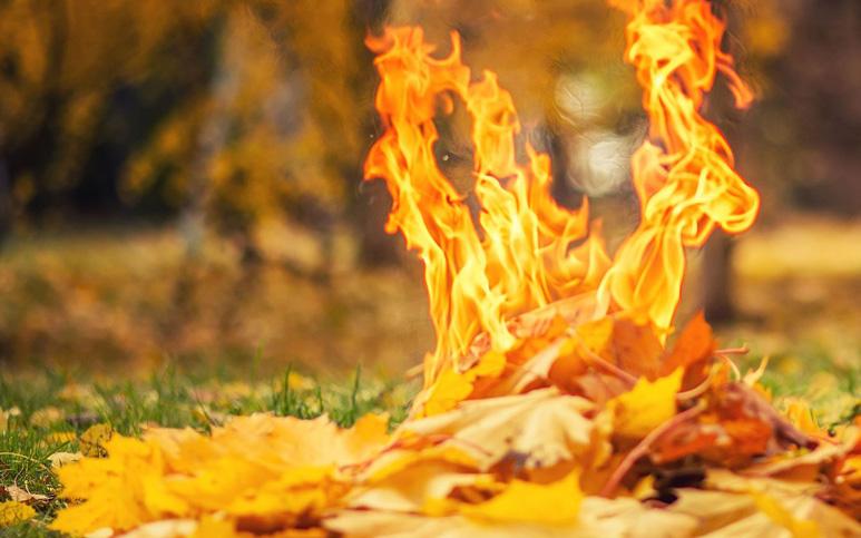 На сайті президента з'явилась петиція проти спалювання трави - спалювання сміття, Президент України, електронна петиція, адміністративні правопорушення, адміністративна відповідальність - Burn leaves