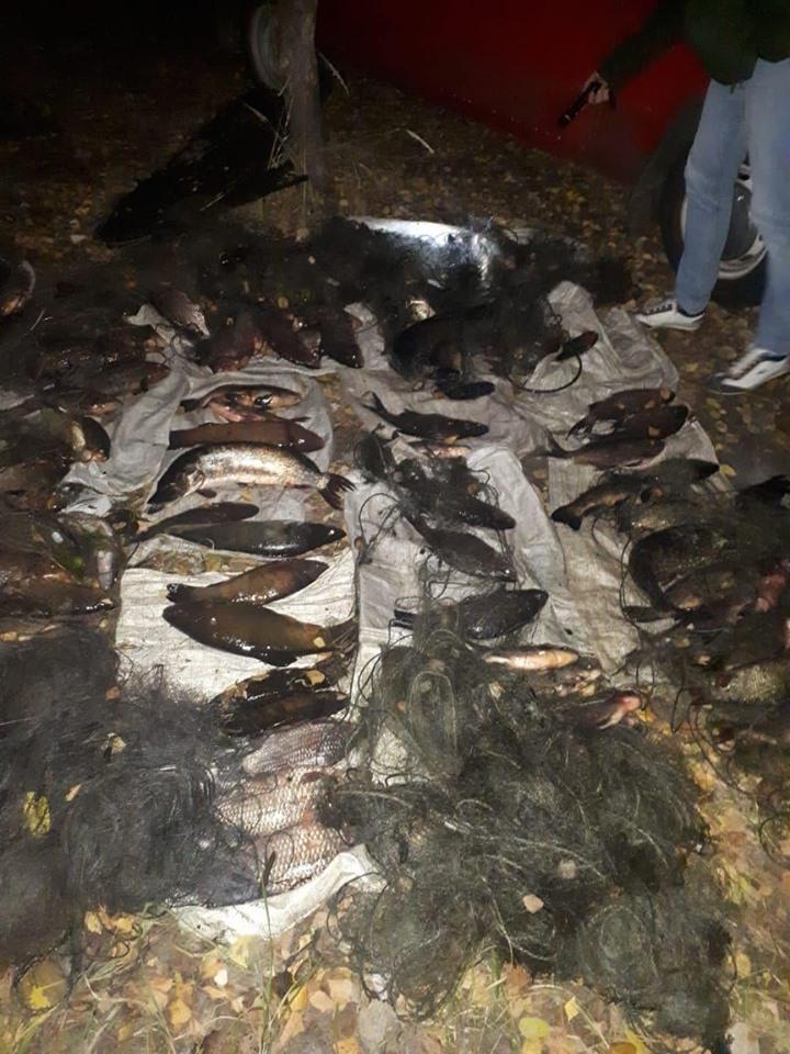 На Вишгородщині за 10 днів зафіксовано 60 випадків браконьєрства - Поліція, київщина, Київський рибоохоронний патруль, збитки, Вишгородський район, браконьєри - 1023 Ryba3