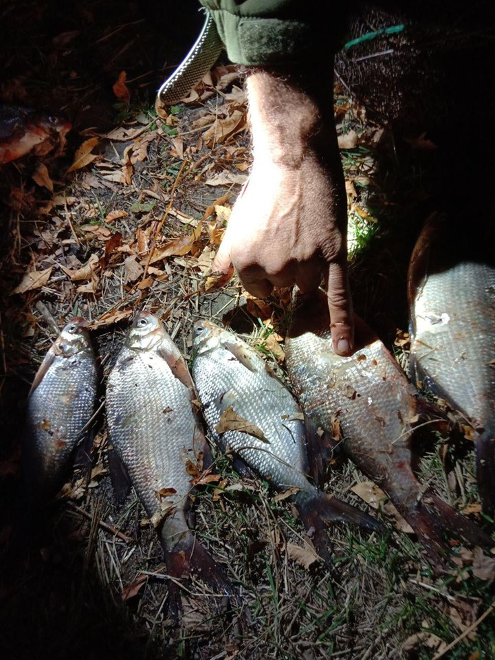 На Вишгородщині за 10 днів зафіксовано 60 випадків браконьєрства - Поліція, київщина, Київський рибоохоронний патруль, збитки, Вишгородський район, браконьєри - 1023 Ryba4