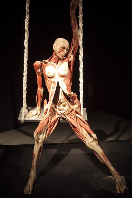 Анатомічна виставка Ґунтера фон Гаґенса «Всесвіт тіла» триватиме у Києві до грудня -  - 167172