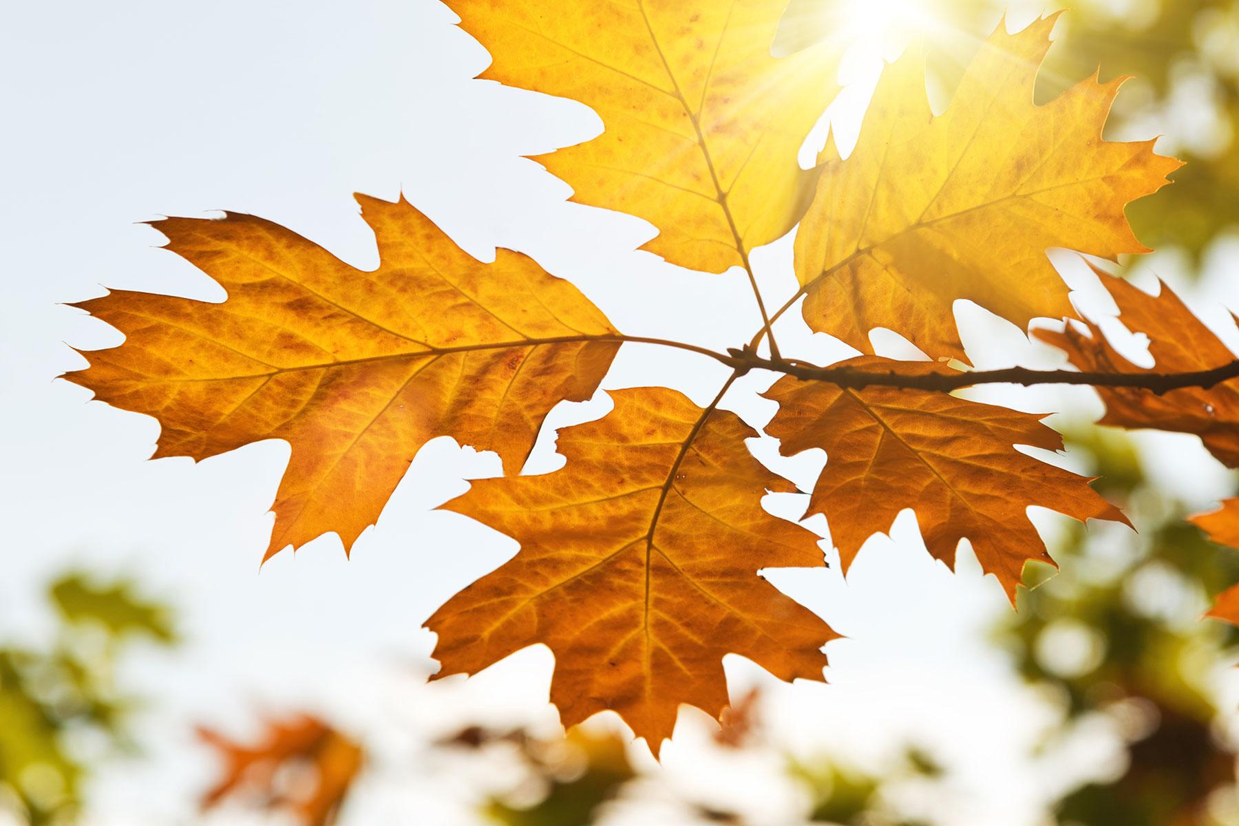 17 жовтня на Київщині буде по-літньому темплим - погода - 17 pogoda3