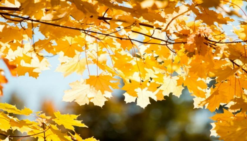 18-го жовтня буде як у Африці: Україна знову стане однією з найтепліших в Європі - погода - 18 pogoda3