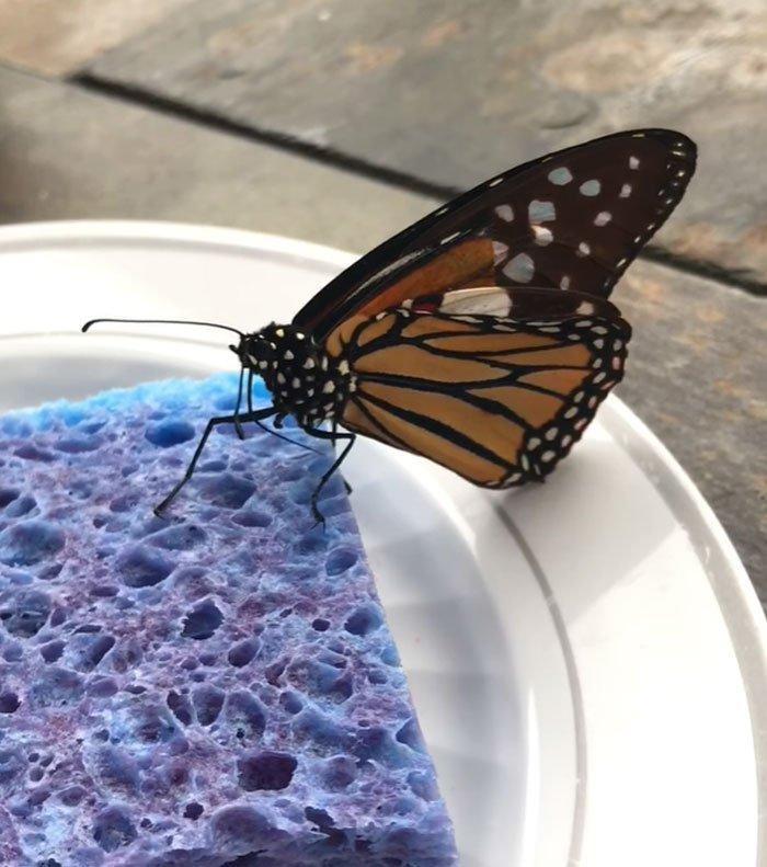 Американка провела ювелірну операцію по заміні зламаного крила метелика (ВІДЕО) - комаха - 21 metelyk2