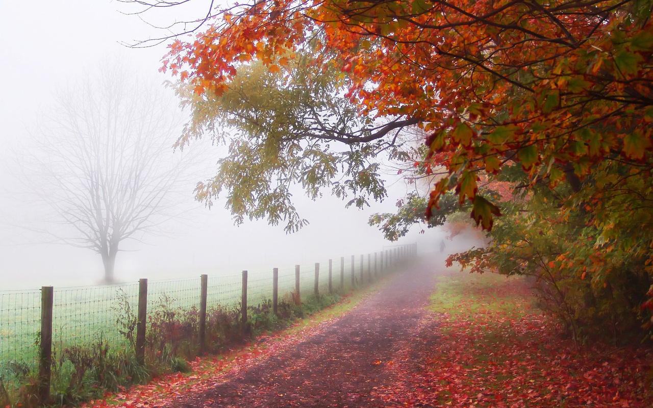 Туманний четвер: погода на 24 жовтня на Київщині - погода - 24 pogoda2