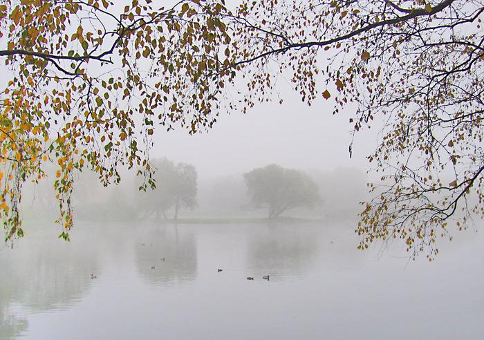 Без опадів, туман, південний слабкий вітер: погода на 25 жовтня на Київщині - погода - 25 pogoda3