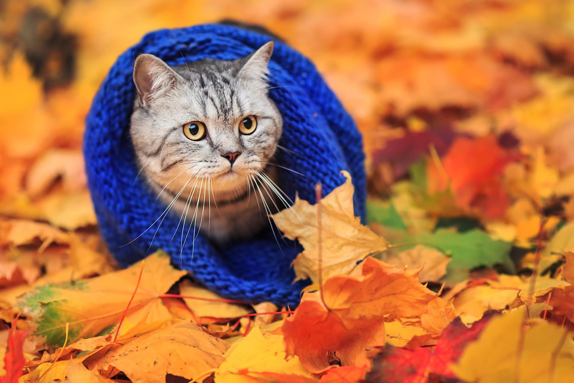 28 жовтня на Київщині відчутно похолоднішає - погода - 28 pogoda3