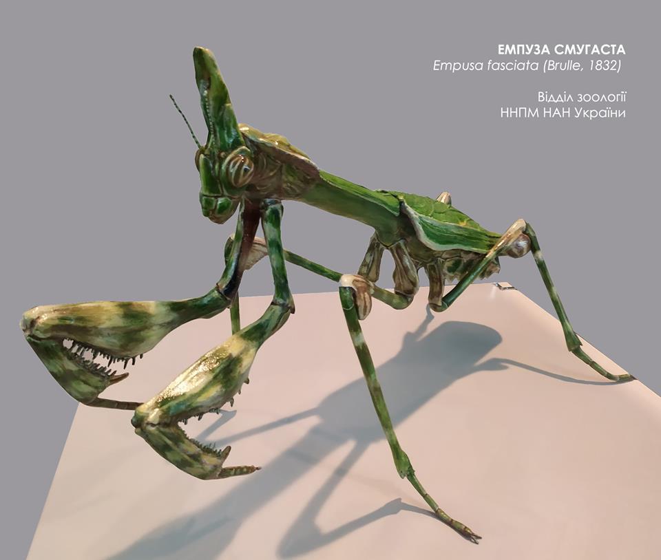 У природничому музеї Києва відкрили виставку рептилій та речей дослідників - Тварини, столиця вихідні, НАН України, експозиція, виставка - 71761054 1173566356172252 664670365426909184 n