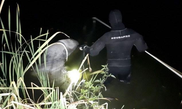 У одному із столичних озер потонув кінь -  - 72817753 1392026190955341 4957080579632791552 n