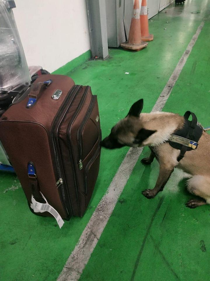 """У ДП МА """"Бориспіль""""службовий собака в речах іноземця виявив снайперський приціл -  - 72845397 683794505440454 6323854252573720576 n"""