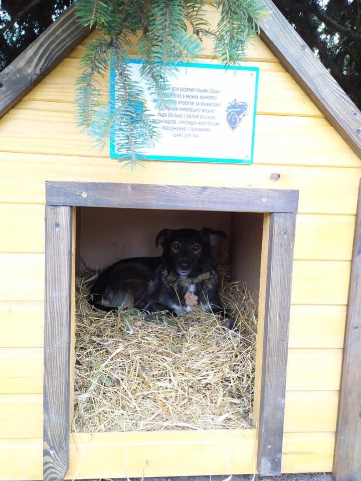 В Українці для безпритульних тварин встановили домівки -  - 7F2A7B9A D431 4A51 BAA6 7E9D6645CA08