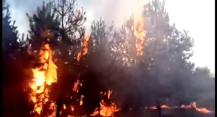 Бориспіль: люди підпалили ліс смажачи шашлики -  - Novyj rysunok 3