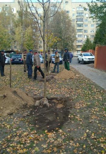 У Броварах висаджують дерева -  - Screenshot 15 1