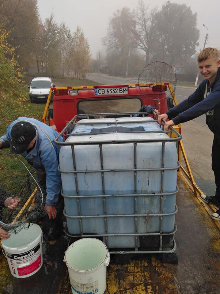 Зарибили ставок у Гостомелі: у водойму на Кимерці запустили 520 кг малька коропа - Табачук, риба, Приірпіння, київщина, зариблення, Гостомель - Zaryb Gost 1