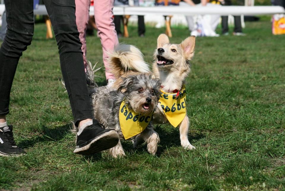 barbosa Кубок Барбоса: виставка безпородних собак