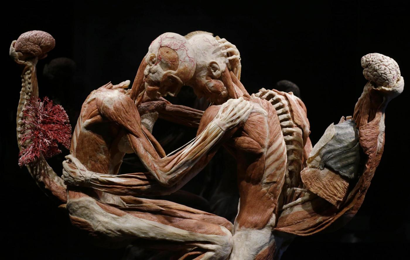 Анатомічна виставка Ґунтера фон Гаґенса «Всесвіт тіла» триватиме у Києві до грудня -  - body words 4