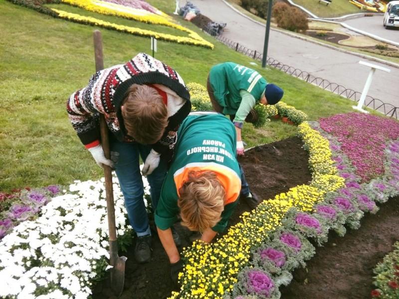 «Квіткове сузір'я»: у Києві відкрили осінній фестиваль хризантем -  - ef47aa048f25a61 800x0