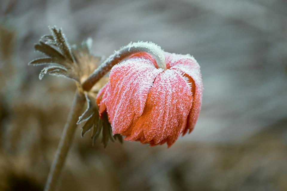 В Україні очікуються похолодання та заморозки