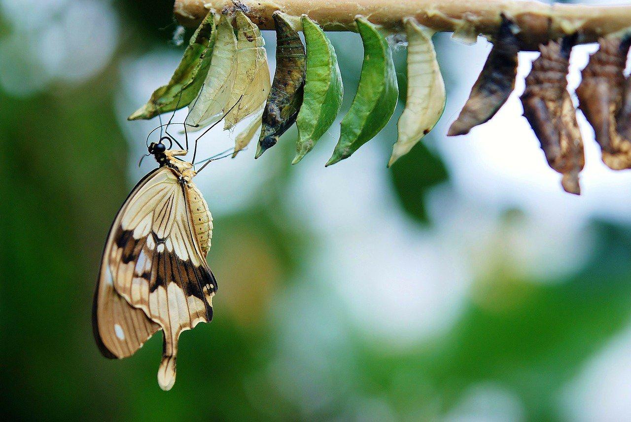На 40% менше: комахи зникають набагато швидше, ніж раніше вважали вчені -  - 06 nasekomye