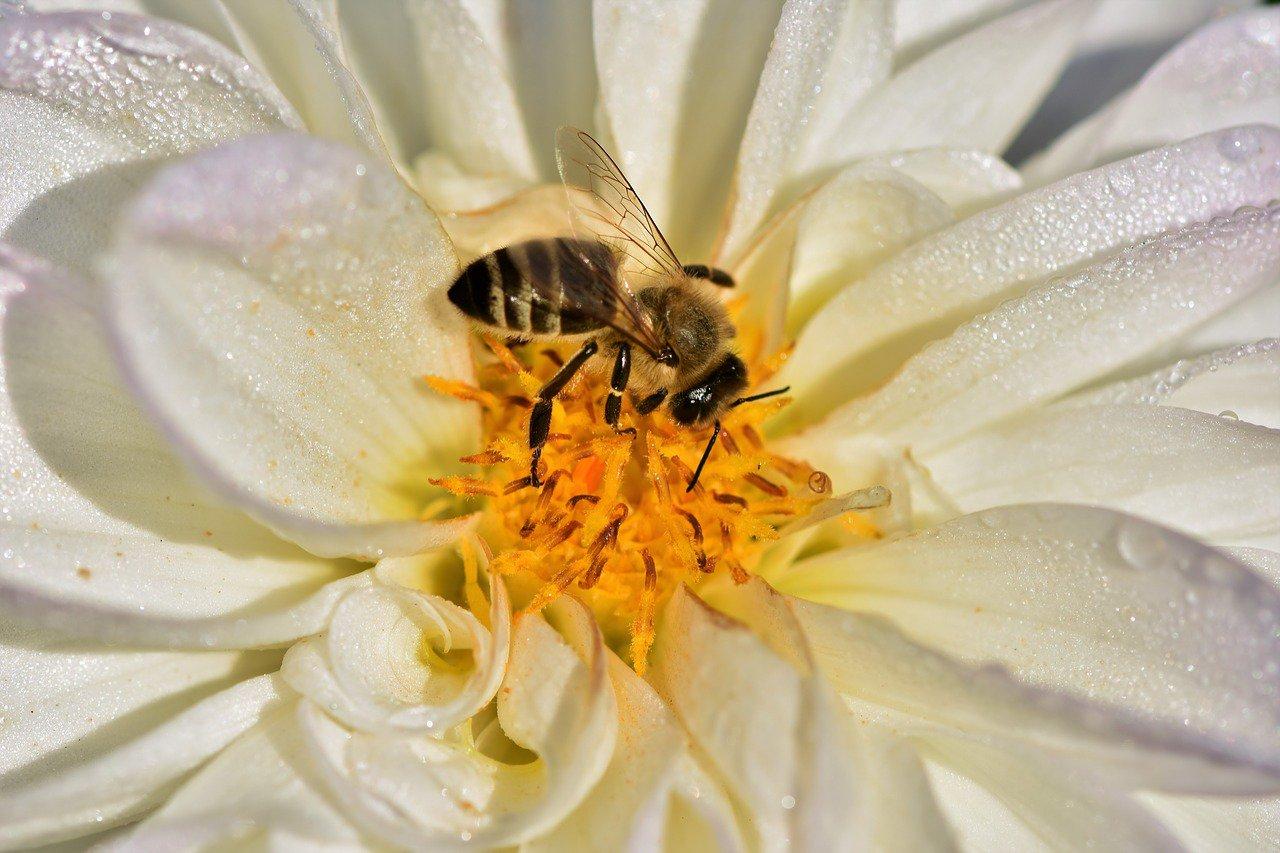 На 40% менше: комахи зникають набагато швидше, ніж раніше вважали вчені -  - 06 nasekomye3