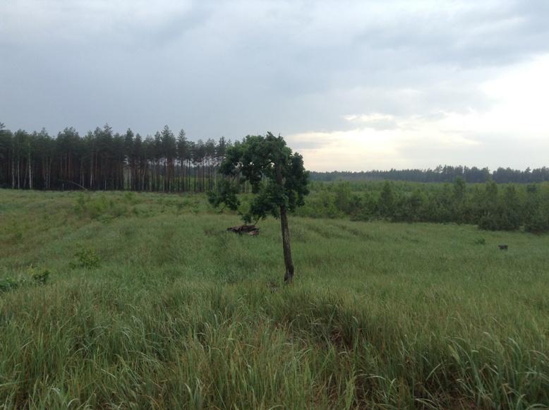 Переяславська РДА передала частину лісу приватним особам -  - 1 10
