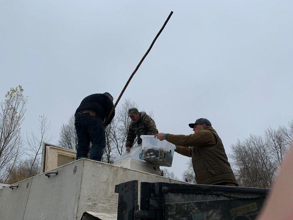 1111_Ryba1 У Дніпрі побільшало риби на 7 тонн