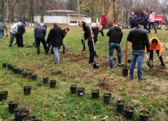 У 5 населених пунктах Київщини висадили понад 800 дерев та кущів -  - 123243 300x216