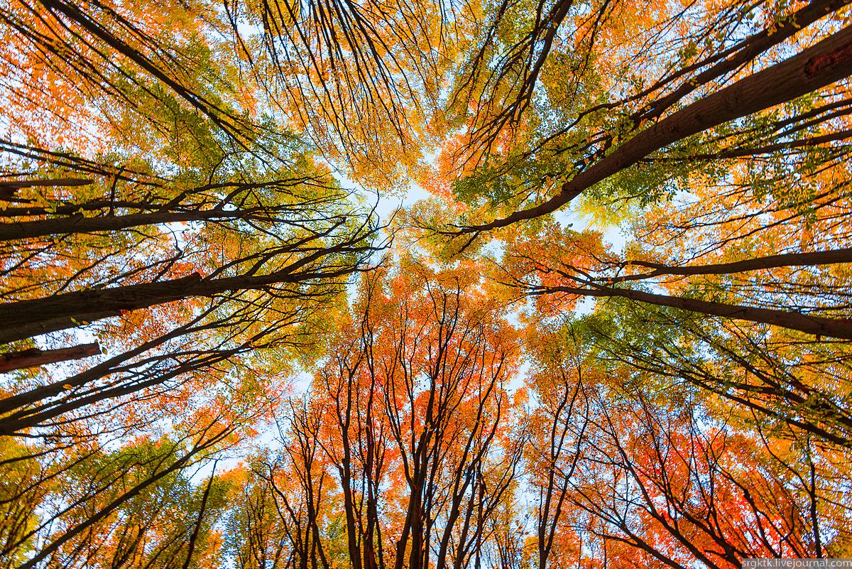 Хмарно і вітряно: погода на Киїщині на четвер, 14 листопада - погода - 14 pogoda2 1