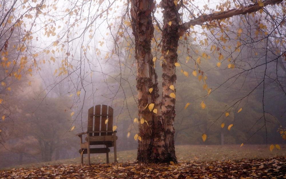 Погода на 15 листопада: на Київщині температура піде на спад - погода - 15 pogoda2