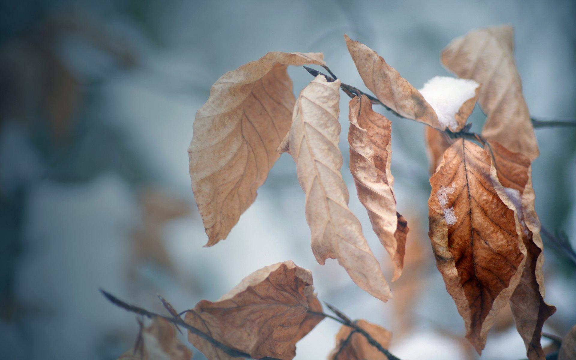 З цього тижня в Україну поступово заходитиме холодне повітря арктичного походження - погода - 18 pogoda2