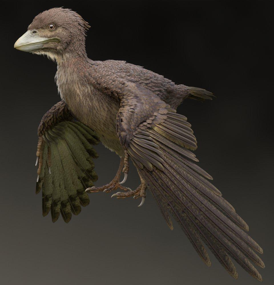 У японському кар'єрі знайшли одну з найдревніших літаючих тварин - динозаври - 19 drevnee