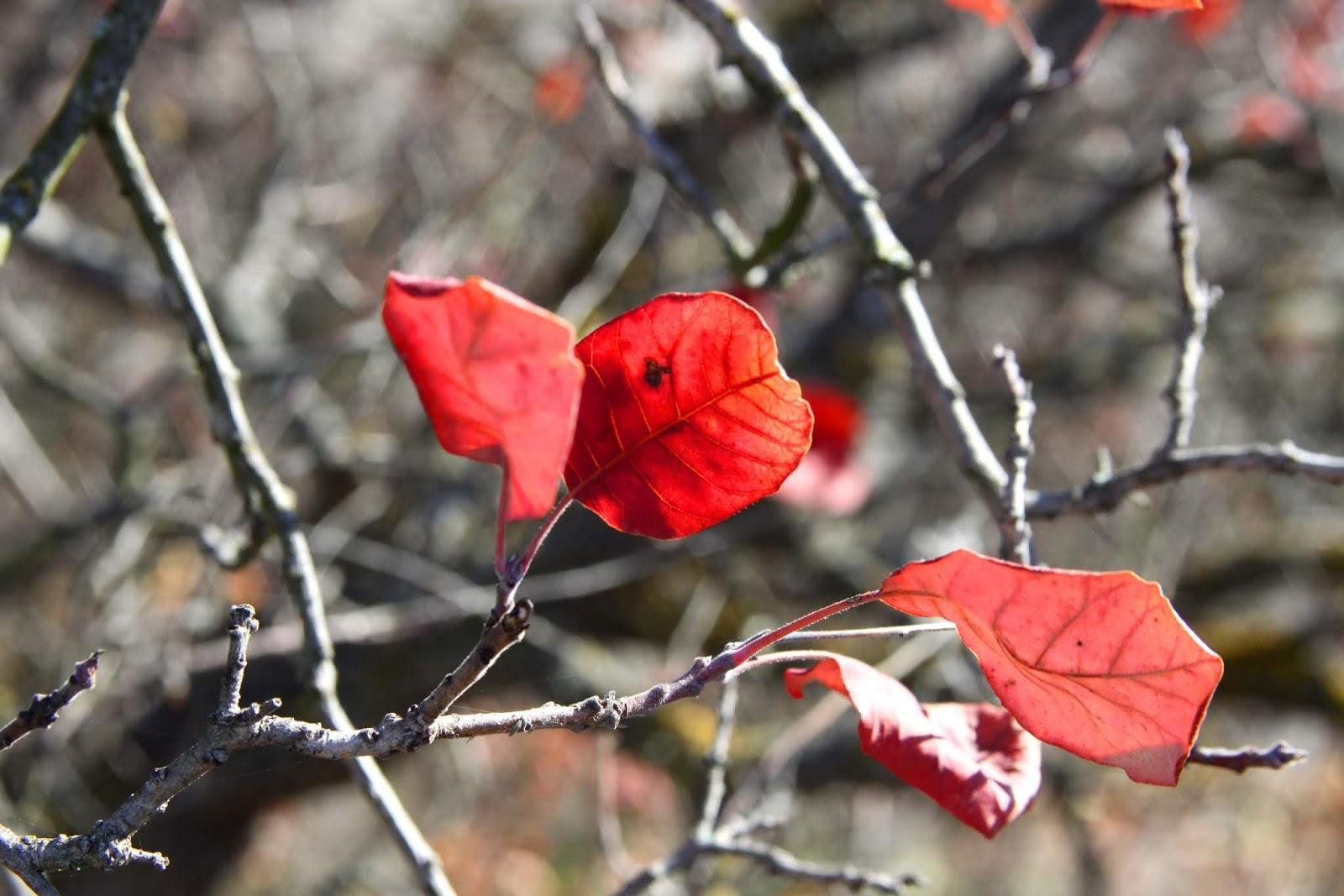 Погода 19 листопада: на Київщині температура повітря й надалі поступово знижуватиметься - погода - 19 pogoda