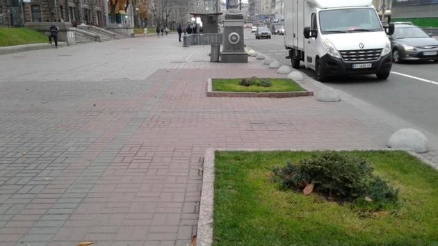 21_kreshhatyk Замість каштанів – кущі ялівцю: на головній вулиці Києва «замінили» символ столиці