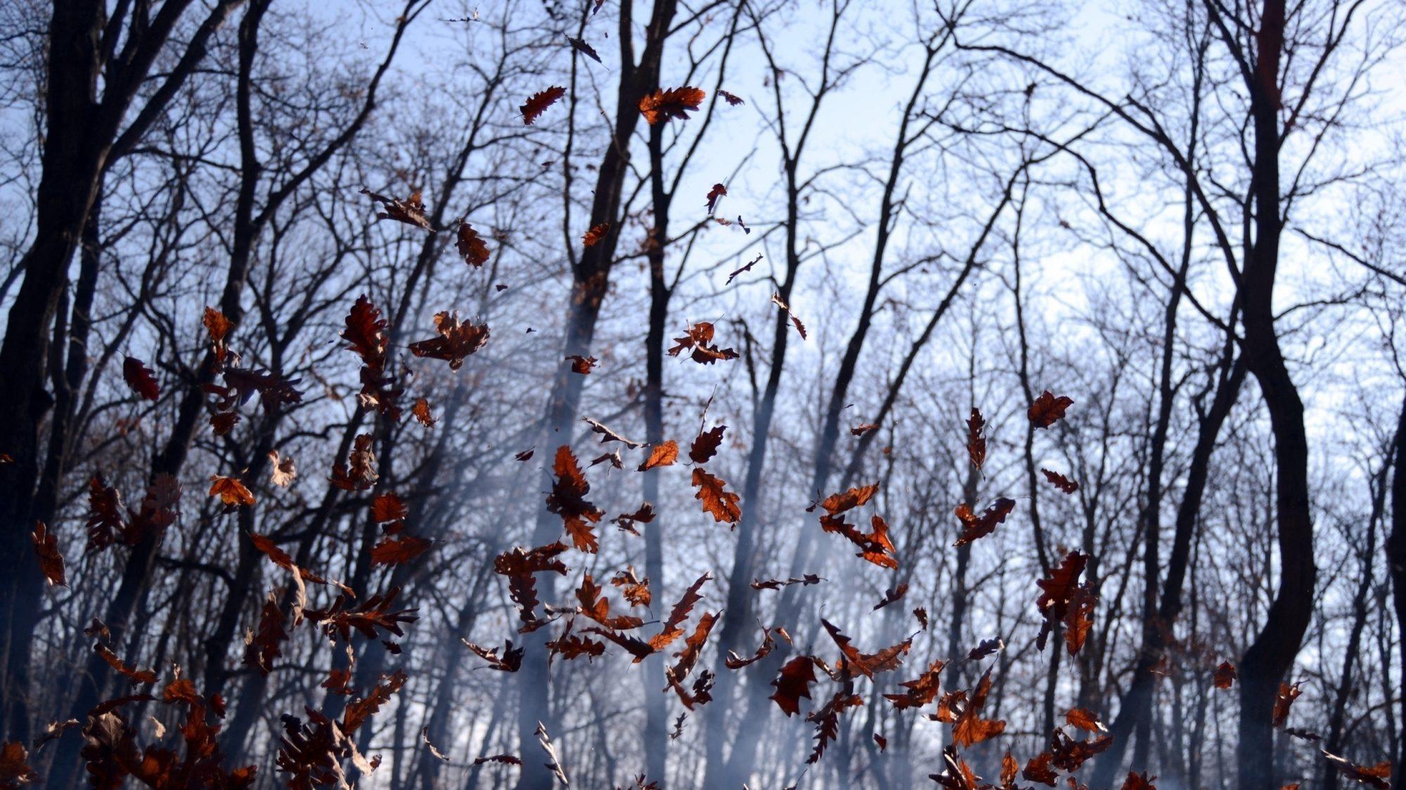 Мінус та сильний вітер: погода на 21 листопада на Київщині - прогноз погоди, погода - 21 pogoda4 2000x1125