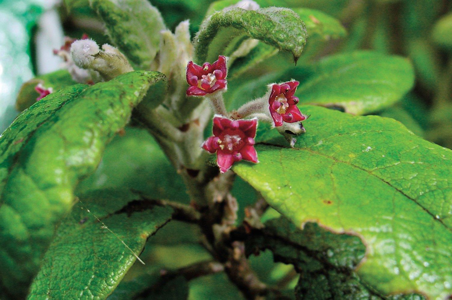 Флора, яку ми втратили: сотні рослин вимерли, якими будуть наслідки вчені не беруться судити - рослини, біорізноманіття - 23 roslyny
