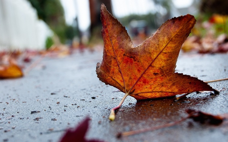 Холодно та сухо: погода на 25 листопада на Київщині - прогноз погоди, погода - 25 pogoda3
