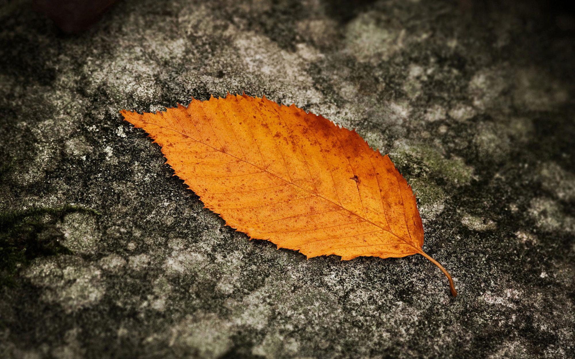 Погода на 26 листопада: у вівторок на Київщині буде морозно, а в середу – потеплішає - прогноз погоди, погода - 26 pogoda3 2000x1250