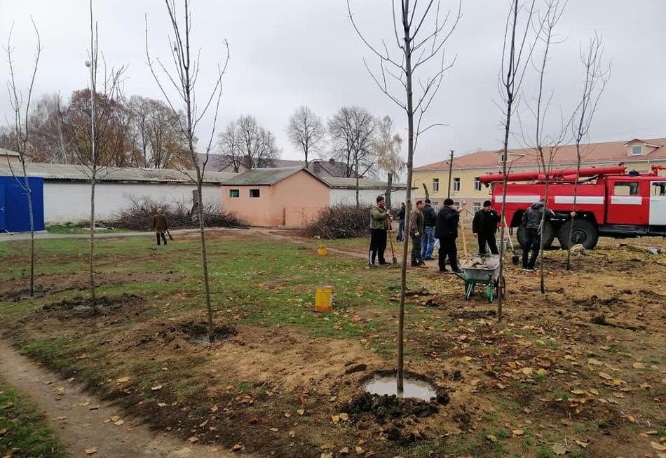 У 5 населених пунктах Київщини висадили понад 800 дерев та кущів